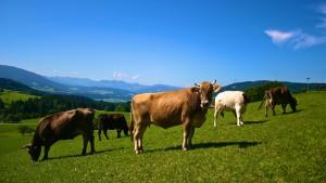 Bauernhof hautnah erleben